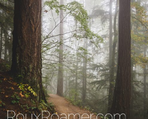 Foggy Forest by Roux Roamer